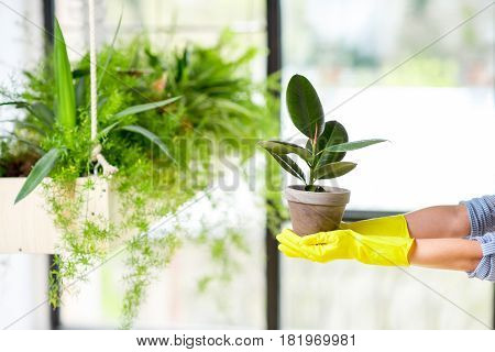 Woman holding a flowerpot with green plant in the orangery