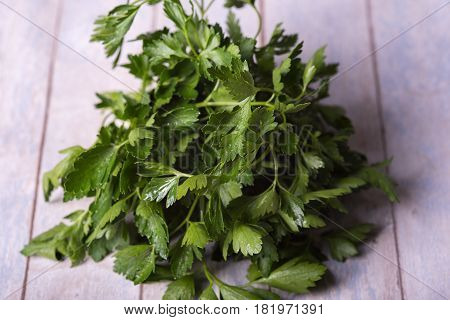 fresh frizzy parsley on a wooden table