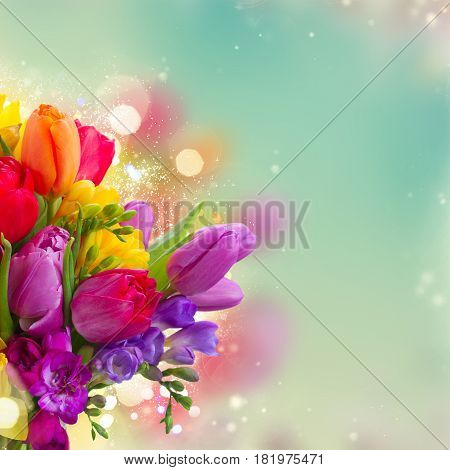 bouquet of bright spring flowers close up over dyed blue bokeh background