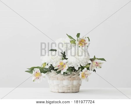 the chrysanthemum in basket on white background
