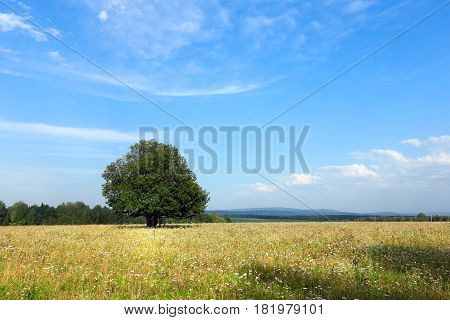 Trees In The Meadow