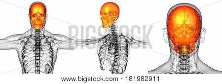 3D Rendering Medical Illustration Of The Skull Bone