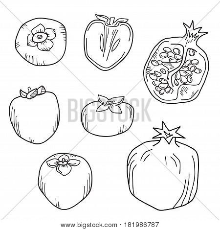 Natural organic pomegranate and persimmons for decorative poster or emblem. Black and white isolated vector illustration.