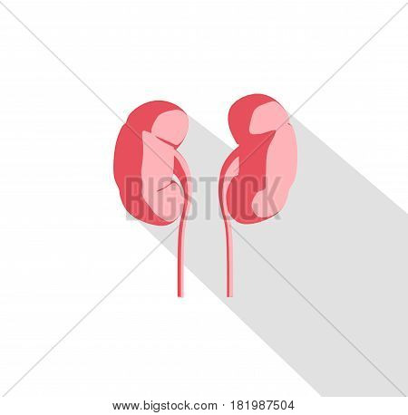 Kidneys infographic. Anatomical icon of kidneys on white background.Illustration.3d illustration