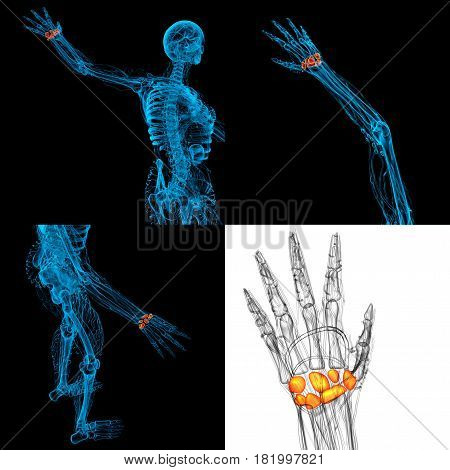 3D Rendering Illustration Of The Human Carpal Bones