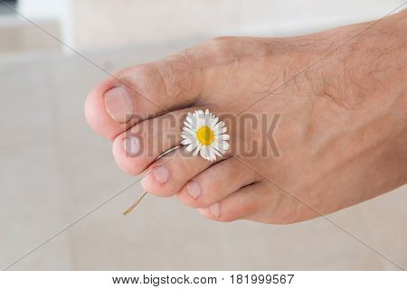 Clean right male foot on a light background holding a small Daisy between fingers. Medical pedicure concept.