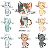 the British Shorthair cats of various colors: black white tabby tortoieseshell lilac; blue; red; chocolate poster