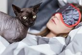 Close up shot of sphinx cat guarding young sleeping lady in her bed in grey and white linen. Focus on cat. Home cozy leasure concept. poster