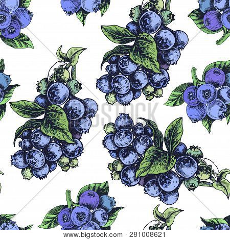 Hand Drawing Sketch Illustratiion Blueberries. Card For Eco Shop, Eruits Pattern.
