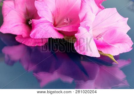 Spring background. Gladiolus spring flowers with free space for text on the glass surface, flower spring composition. Closeup of spring gladiolus flowers