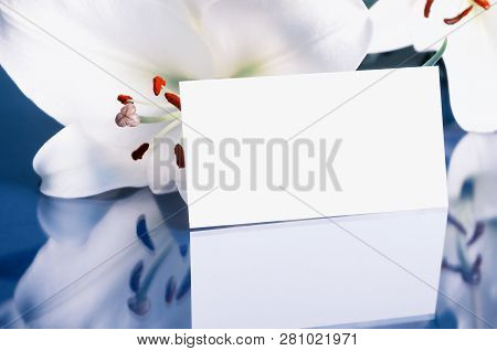 Flower spring background. Lily flower, Lilium Navona, with white blank card, spring flower composition in cold tones