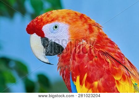 Portrait Of The Macaw Parrot Over The Yellow Background