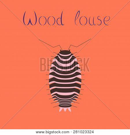 Flat Illustration On Background Wood Louse Cartoon, Animal, Biology