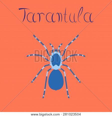 Flat Illustration On Background Spider Tarantula Cartoon, Animal, Biology