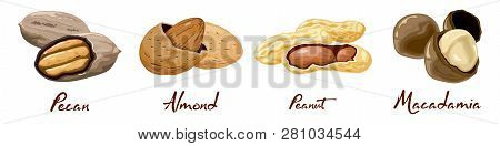 Set Of Named Vector Icons Nuts And Seeds. Food Symbols Collection. Nutrition And Agriculture Concept