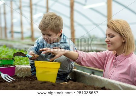 Mother And Son. Mother And Son Working In Modern Greenhouse Garden. Mother And Son Planting Tree. Ha