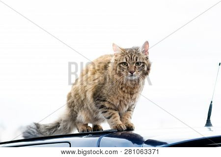Full Body Portrait Outdoor Mixed Breed Cat Gray Brown Portrait Standing