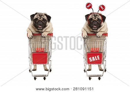 Funny Smiling Shopping Pug Puppy Dog Standing Behind Red Wired Metal Shopping Cart With Sale Sign,