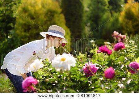 Middle Age Female Gardener Sniffs Fresh Peony. Gardening Activity.