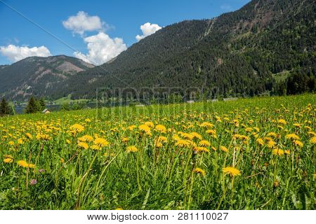 summer meadow with flowers