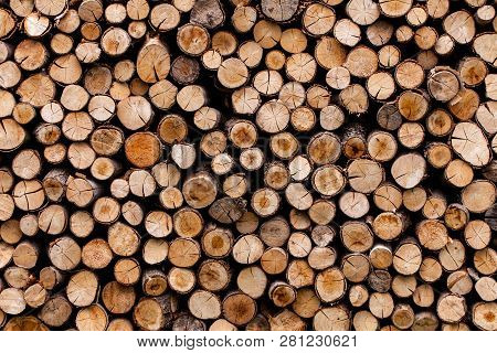 Sawed Tree Trunks And Branches In Different Sizes, Piled Up In Blue Container Wood Storage Industry.
