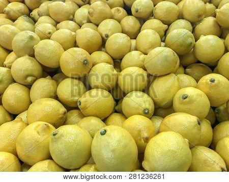 Lemons. Yellow lemons. fresh lemons. raw lemons. Lots of fresh lemons fruits plucked from branch of lemon tree.