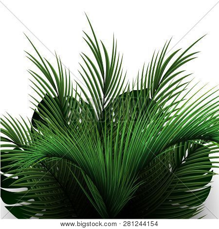 Palm Leaves On A White Background. Tropical Vegetation. Palm Tree Branches Realistic.