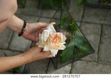 Female Florist Unwrap Fresh Rose And Put In Glass Florarium.event Fresh Flowers Decoration. Florist
