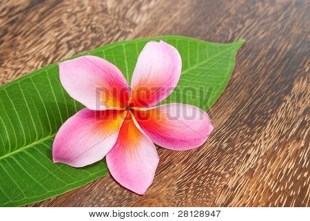 Tropical Plumeria With Green Leaf On Texture Wooden Table For Spa And Wellness Concept