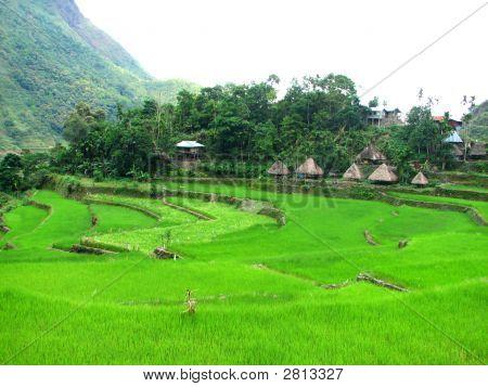 Batad Rice Terraces Village 2
