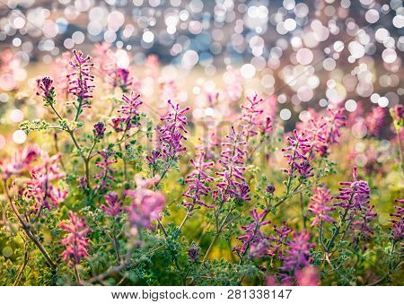 Sring Nature Background With Green Grass, Flowers And Bokeh