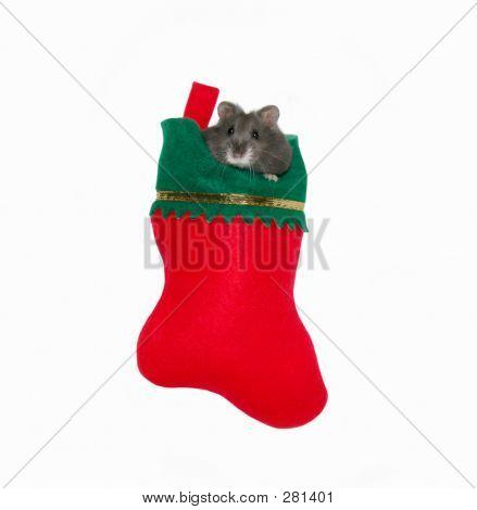 Christmas Stocking Critter