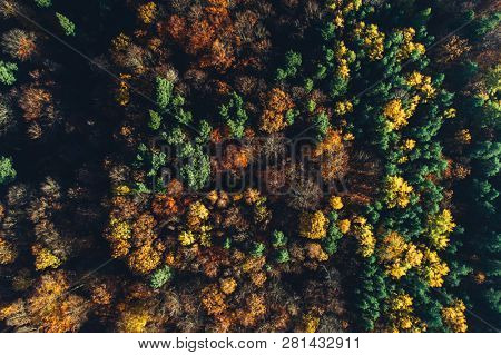 Autumn forest seen from the top view. Seasonal aerial view, nature, golden fall.