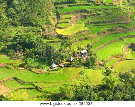 Ifugao Rice Terraces Village