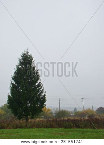Rural Countryside Landscape With A Tree In Autumn