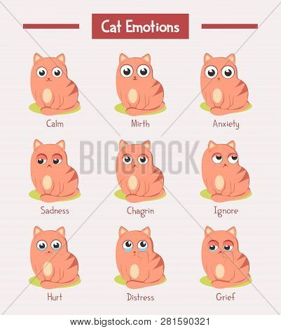 Set Of Isolated Cats With Emotions Expression. Kitty Face With Fun Or Joy, Mirth And Happy, Calm And