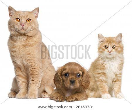 Groep van katten en honden voor witte achtergrond