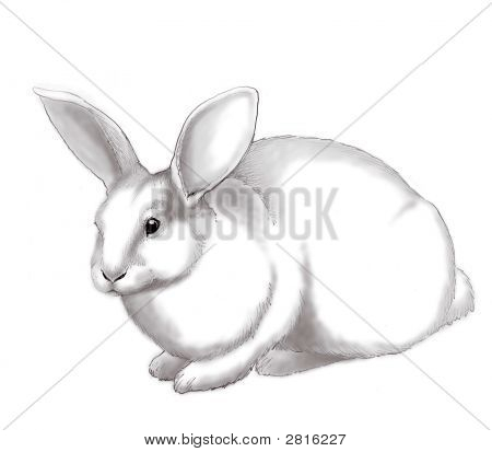 Pet White Rabbit