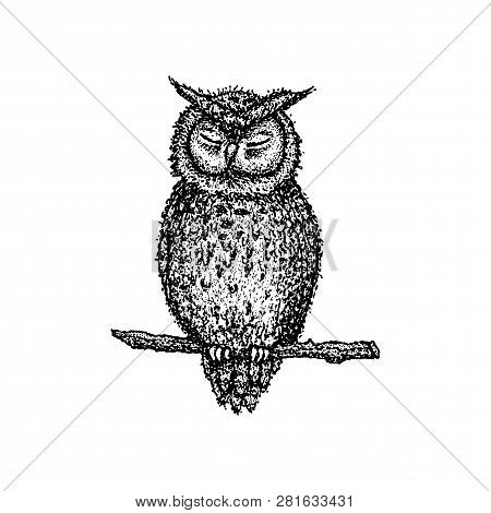 Dotwork Sleeping Owl. Vector Illustration Of T-shirt Design. Tattoo Hand Drawn Sketch.
