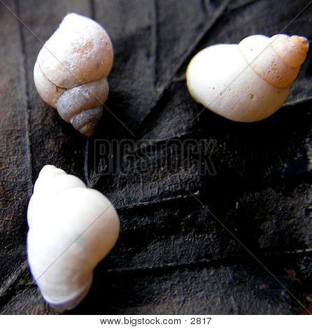 3 Miniature Shells