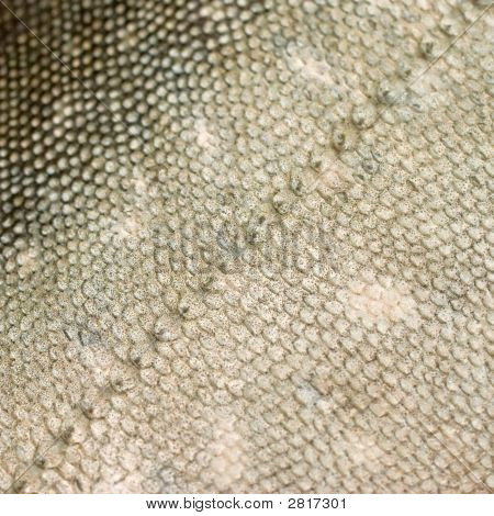 Texture of salmon/rainbow trout like fish (Arctiic Char) scales forming a diagonal line across the photo poster