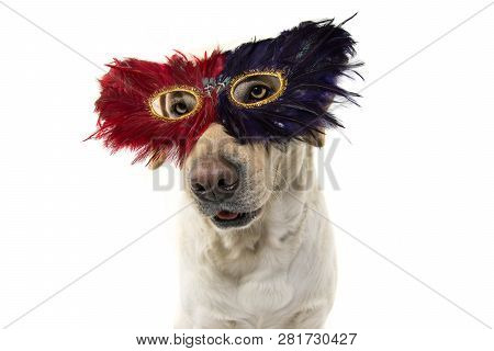 Dog Mardi Gras Feather Mask. Close-up Funny Labrador With A Plume Carnival Eyemask. Isolated Shot Ag