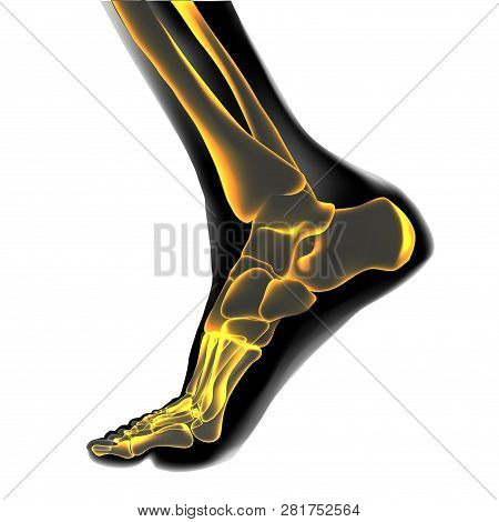 Visualization Of Bones Of Foot. Anatomy Of Joints, Human Leg Realistic Black And Yellow Transparente