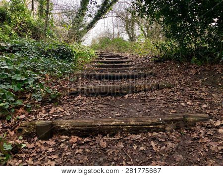 Footpath steps uphill in deciduous woodland