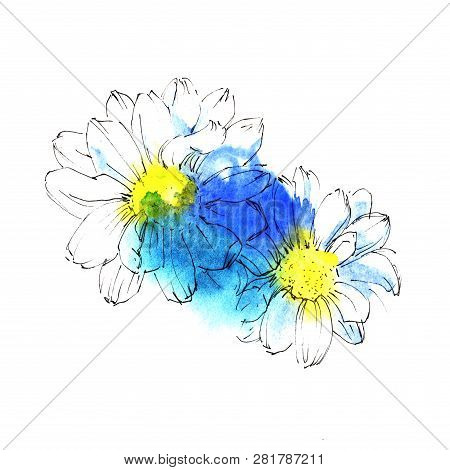 Two White Chrysanthemum With Yellow Center In A Blue Blots. Hand Drawn Colorful Watercolor Sketch.