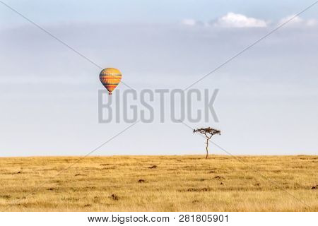 Lone acacia tree with vultures, on the open grassland of the Masai Mara, with a hot-air balloon in the sky