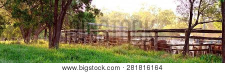 Cattle Being Round Up Into Yards In Late Afternoon Light, Ready For Droving To Another Property In T