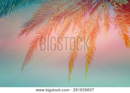 Beautiful Tropical Background. Dangling Palm Tree Leaves On Blue Sky Sunset Background. Trendy Color
