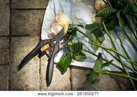 Florist Decorator Pruner And Fresh Roses Lying On Stone Floor. Event Fresh Flowers Decoration. Flori