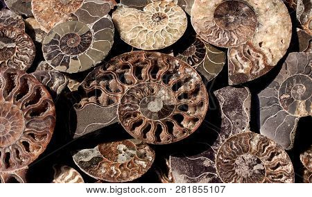 Died-out Cephalopoda Mollusks. Background Of Fossil Ammonites. Polished Half Of Petrified Shells As